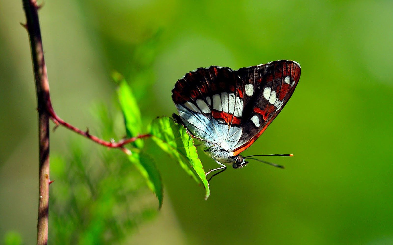 hd-butterfly-with-a-beautiful-butterfly-sitting-on-a-plant