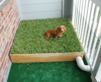 Dog Porch Potty with Real Grass and Drainage System ...