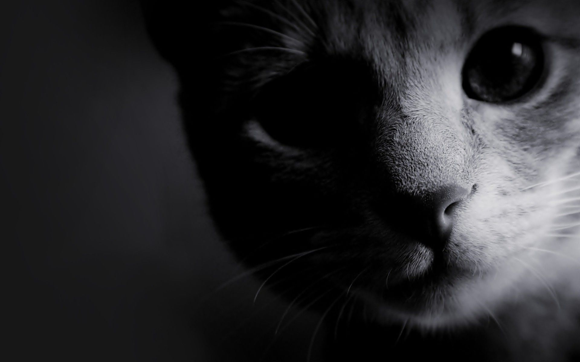 black and white photos | black and white cats wallpaper | black