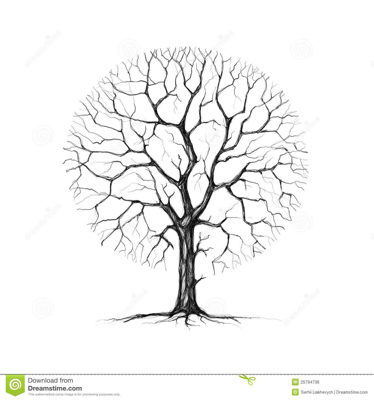 Southern Live Oak Drawing