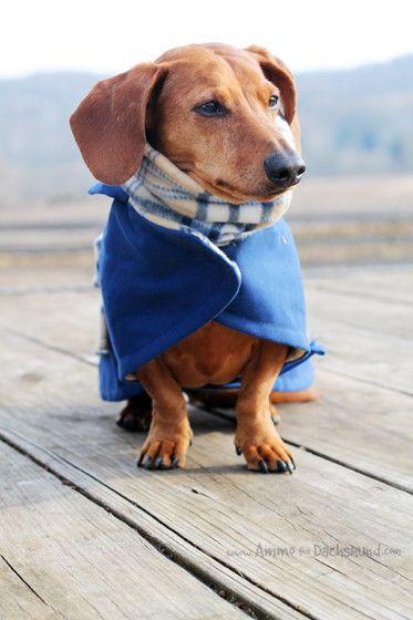 The 25+ best Dachshund clothes ideas on Pinterest
