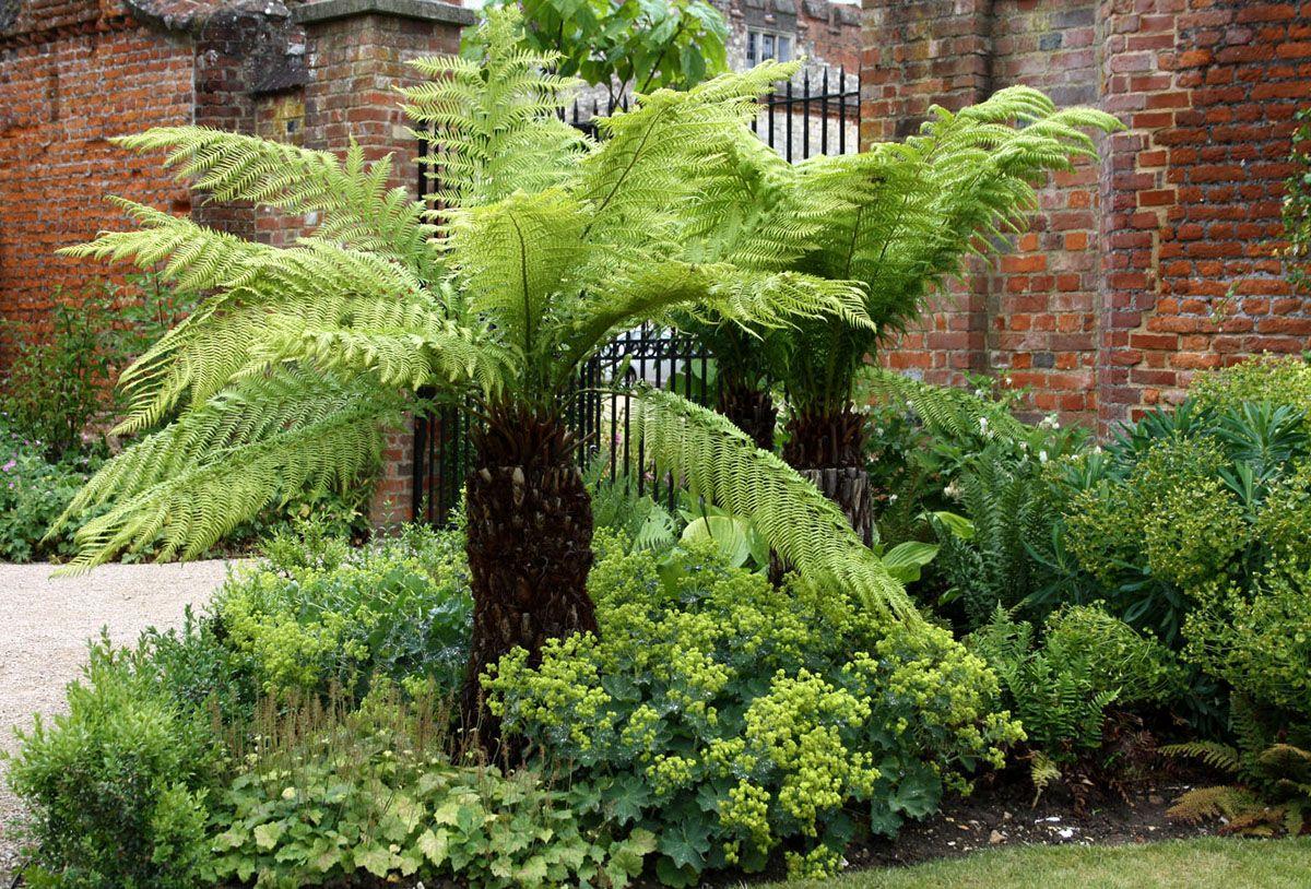 Images For > Tree Fern Project C&J's Backyard Pinterest