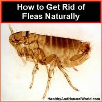 kill fleas in carpet naturally  Floor Matttroy