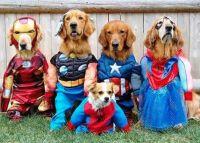 11 Superhero Costumes For Pets | Cuteness.com | Pet ...