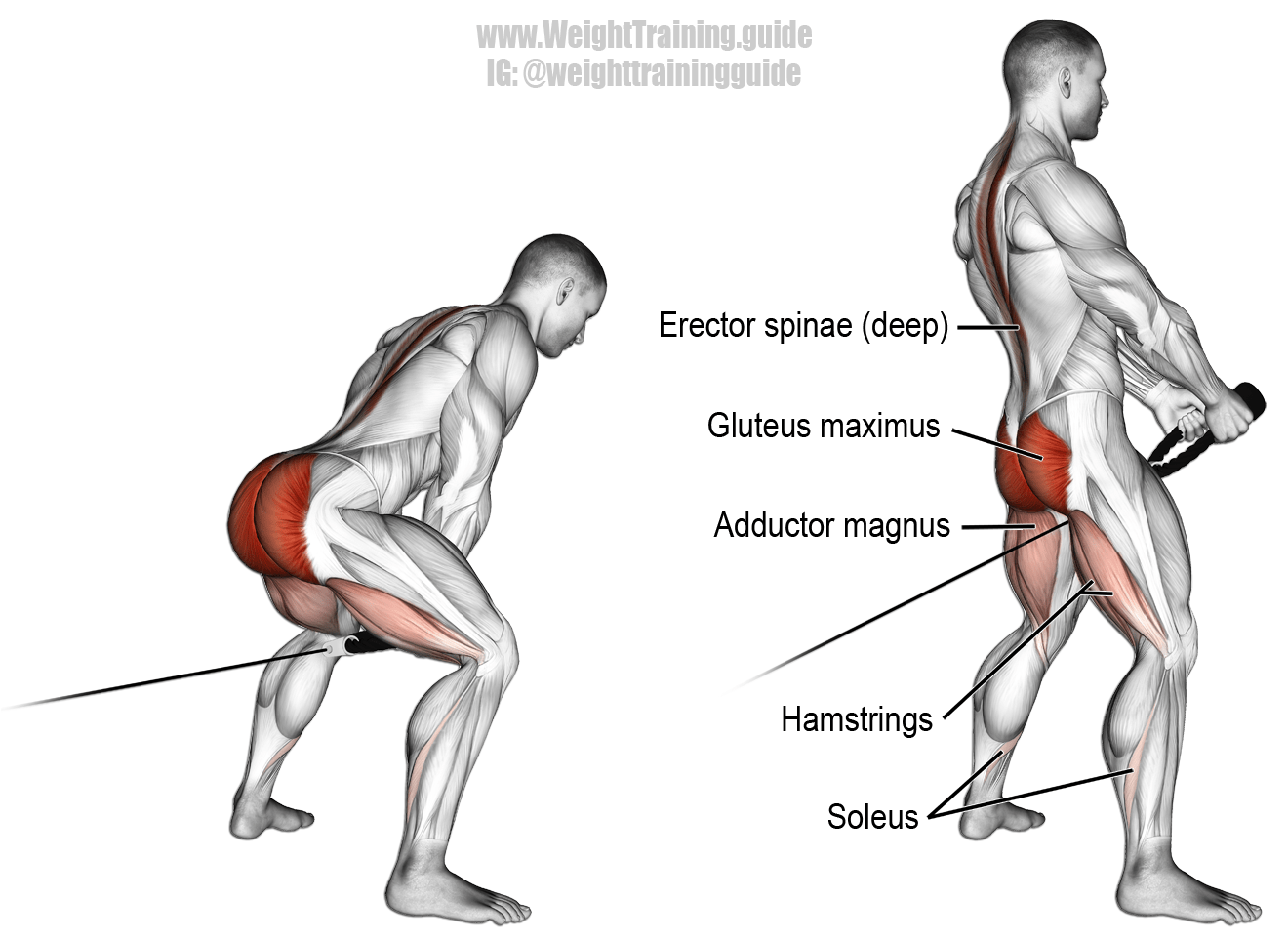 Cable pull through. A compound exercise. Target muscle