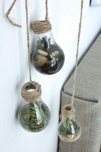 DIY lightbulb terrarium | Plants, Home decor and Terrarium