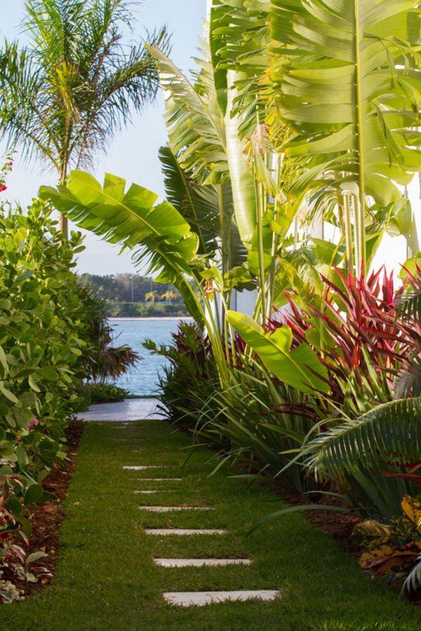 beautiful tropical bananas tree