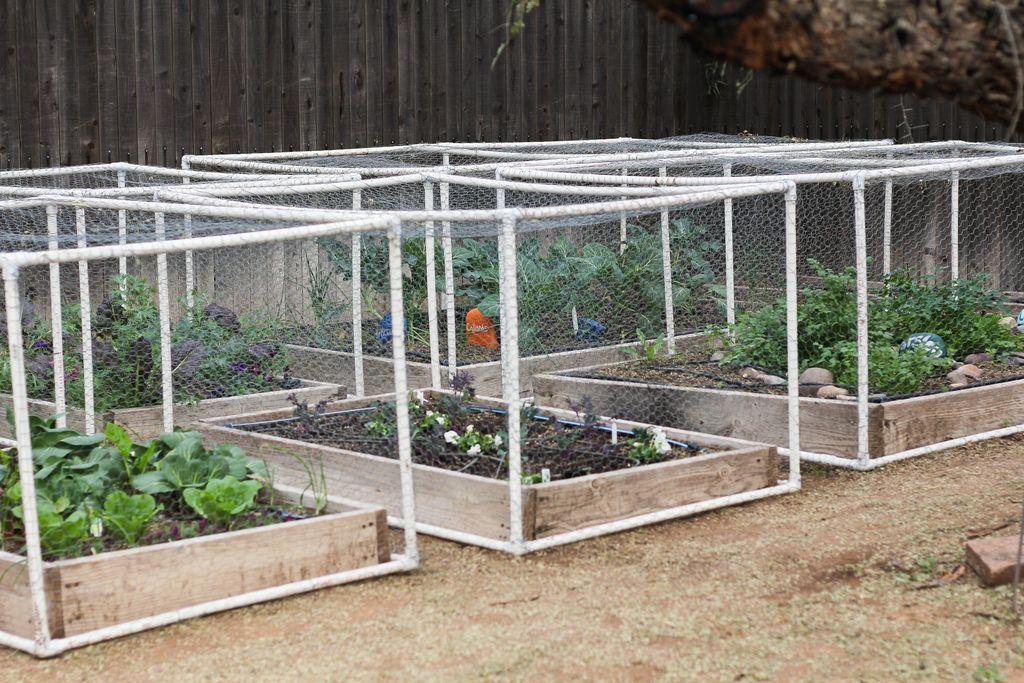 Building Vegetable Garden Your Backyard
