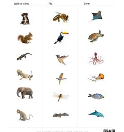 Animal Coverings Scales Worksheet   Printable Worksheets and Activities for  Teachers [ 3300 x 2550 Pixel ]