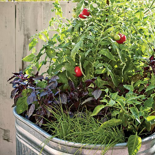 Plant A One Pot Vegetable Garden Gardens Container Gardening