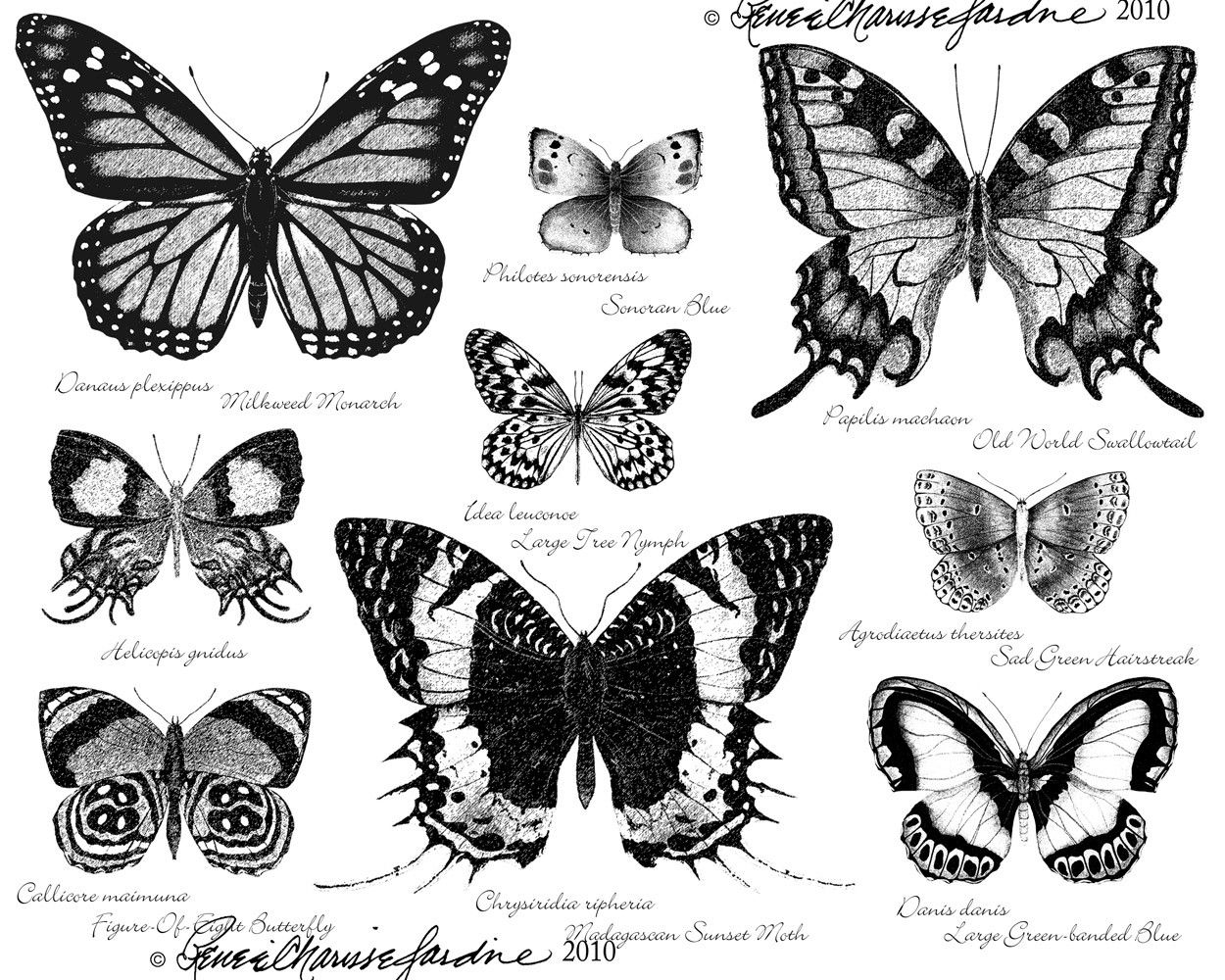 Butterfly Black And White Hand Signed Glicee By