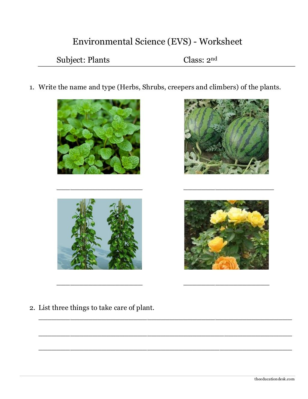 Environmental Science Evs Plants Worksheet Class Ii By Theeducationdesk Via Slideshare