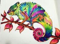 Chameleon! Magical Jungle! Coloring books! Johanna Basford ...