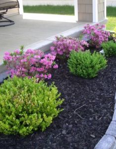 Read on for strategies that you can use improving your home with great beginner landscaping ideas cheap easy results also landscape plant are trying to find the perfect rh pinterest