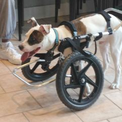 Wheelchair Leg Support Office Chair With Neck Wheelchairs For Handicapped Dogs Hand Built Quality By