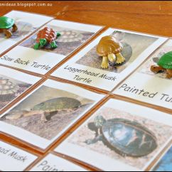 Venn Diagram Of Reptiles And Amphibians Bar Math 5th Grade Free Types Turtle Cards Post Contains