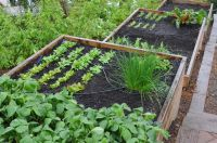 Terraced cedar-framed raised beds. | TERRACED | Vegetable ...