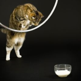 Image result for How to jump through hoops cat pinterest