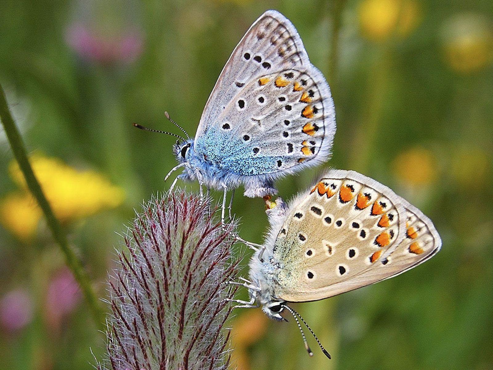 85 best butterflies images on pinterest | butterflies, beautiful