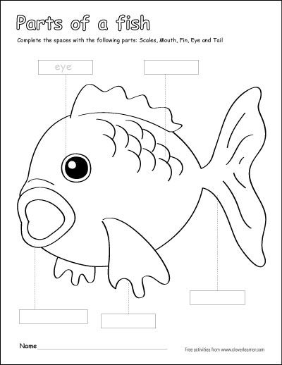 Parts of a fish preschool colouring activity. http
