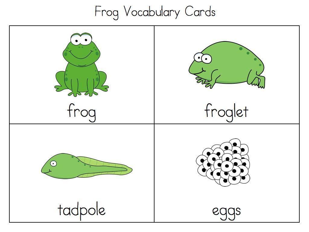 Frog Cycle Activities