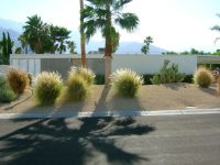 Xeriscaping Ideas for the front and back yards of a Mid ...