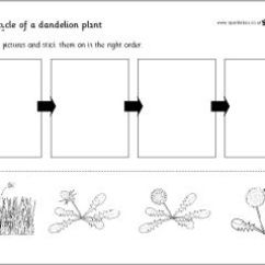 Diagram Of The Life Cycle Strawberry 2000 Vw Jetta Vr6 Fuse Box Free Plant Printables~ Two Cut-n-paste Activities Help Students Learn About ...
