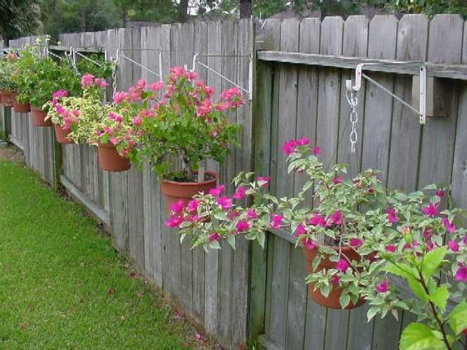 Landscaping Along Fence Line One Way To Display Bougainvillea Is