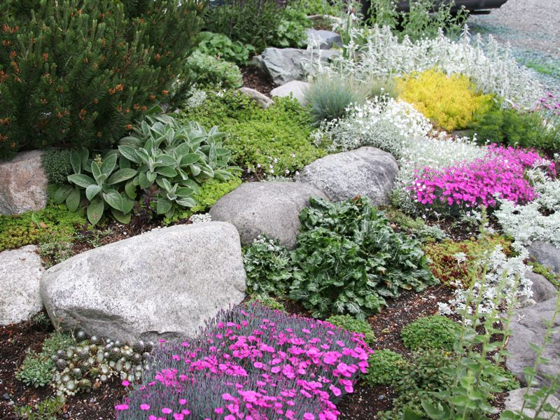 300 Best Images About Rock Gardens & Ground Covers On Pinterest