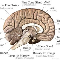 Brain Diagram Inside Fujitsu Ten Stereo Wiring An Etymological Map Of The By Neuroskeptic English