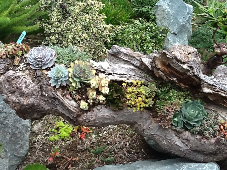 """Love The Driftwood """"planter"""" From Gardens By The Sea Succulent"""