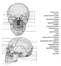skull labeling worksheet | anatomy and physiology ...