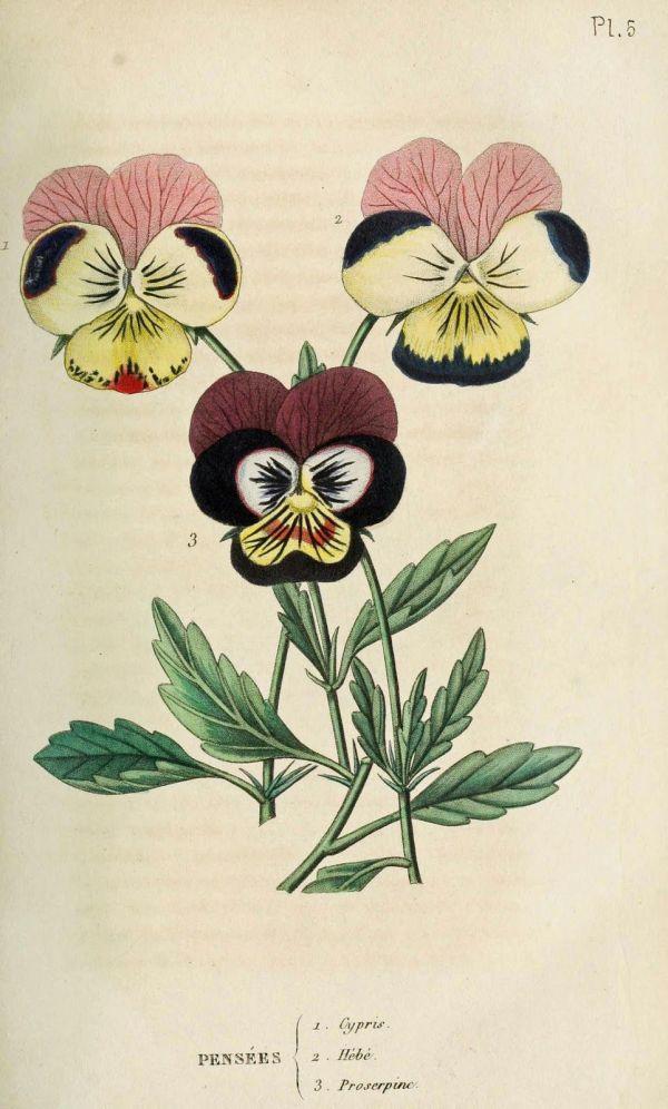Vintage Ephemera Botanical Plates And Illustrations
