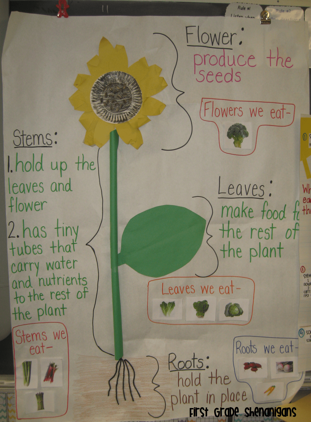 Plant Structure 2nd Grade