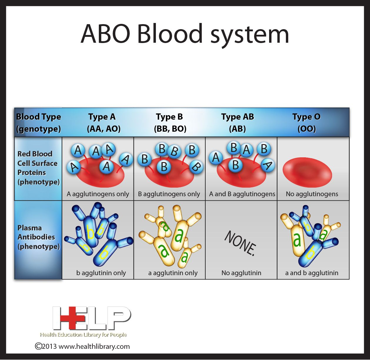 The Abo Blood System Blood Type Compatibility Cross Match