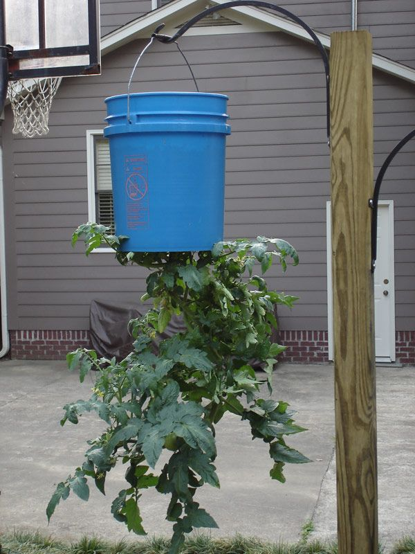 Plant Upside Down You've Seen Those Tomato Planters On TV That