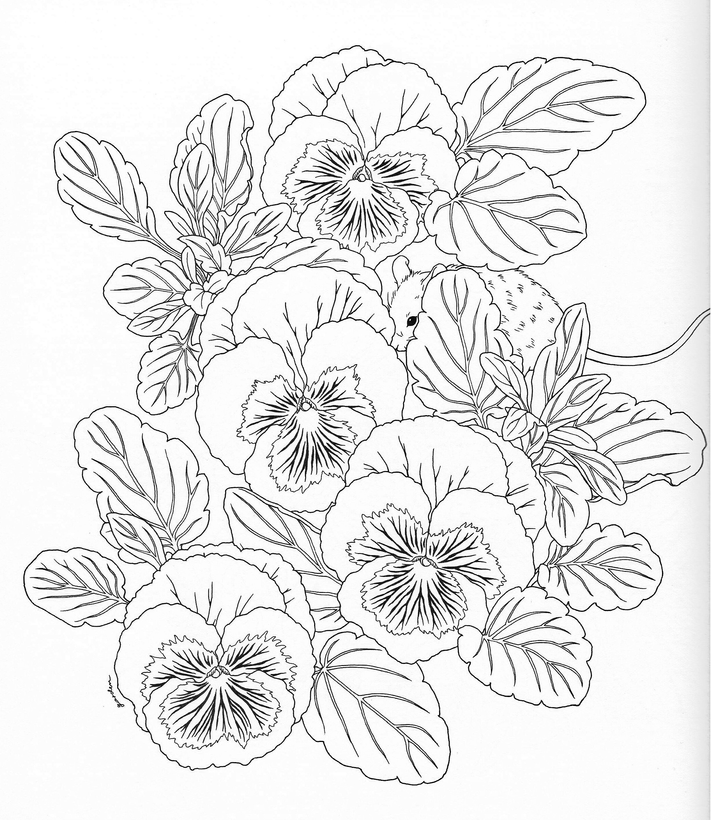 Harmony Of Nature Adult Coloring Book Pg 11