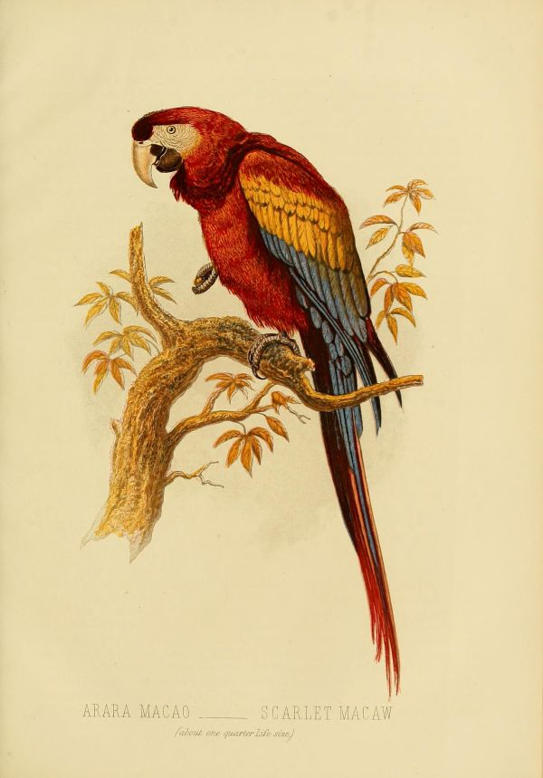 Cassell' Book Of Birds .1 London Cassell Petter And