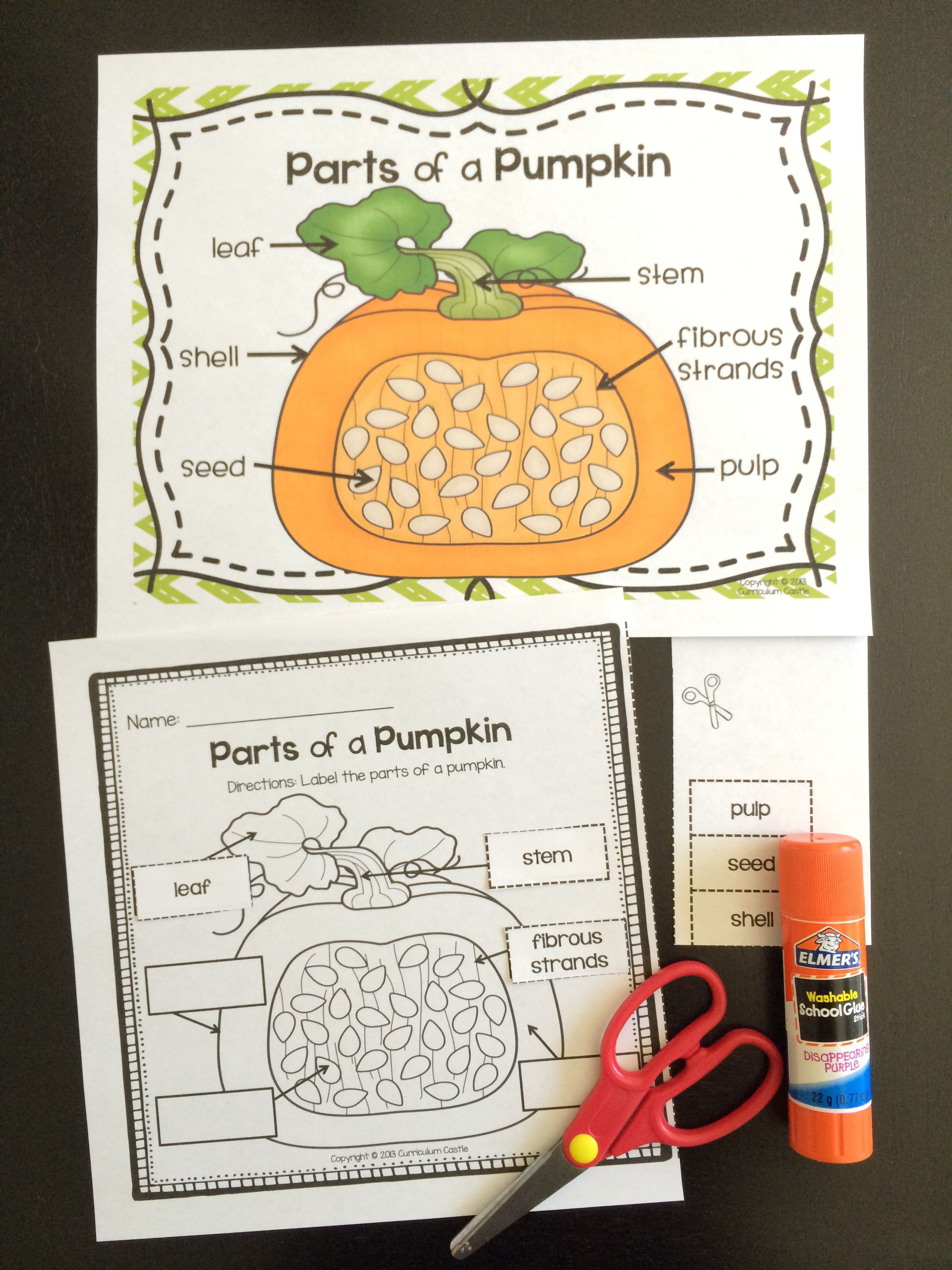 Pumpkin Investigation Unit All About Pumpkins Life Cycle