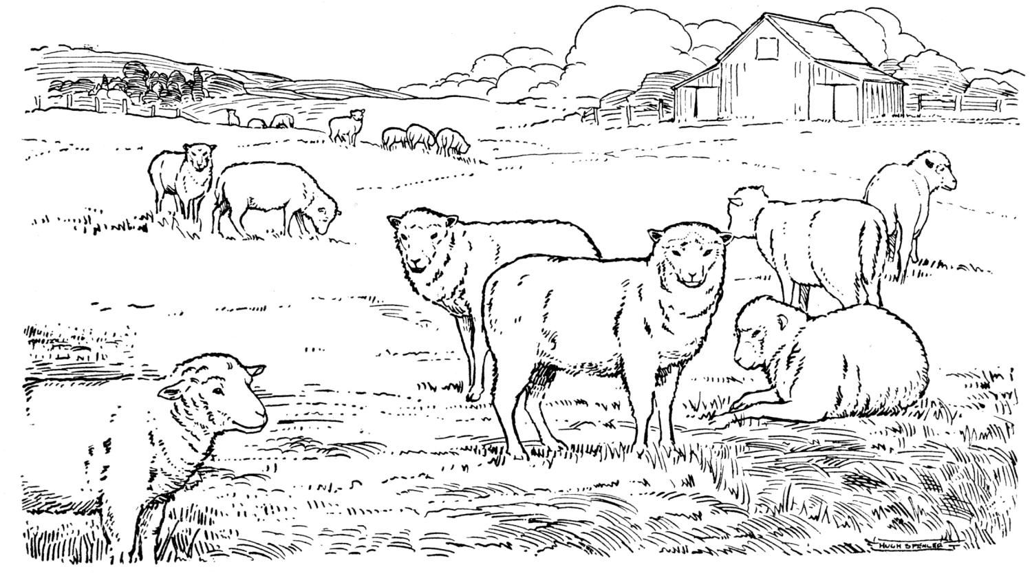 Sheep At Pasture Coloring Page