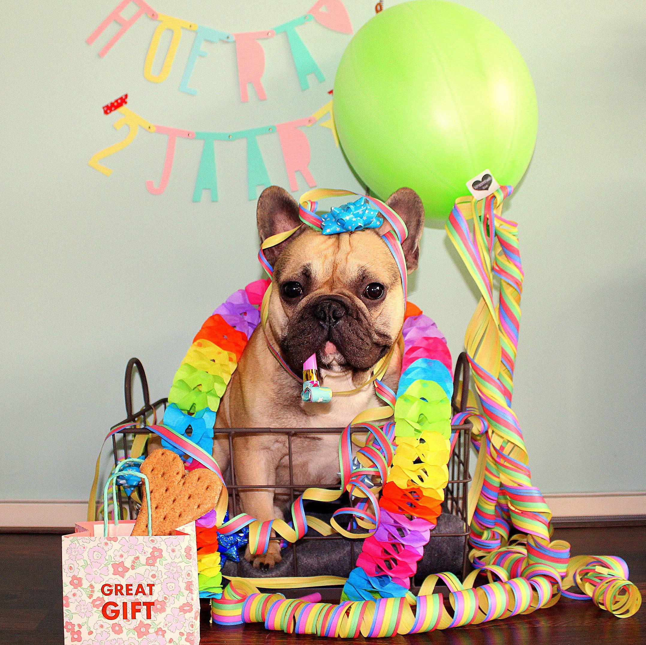French Bulldog Birthday Ecards