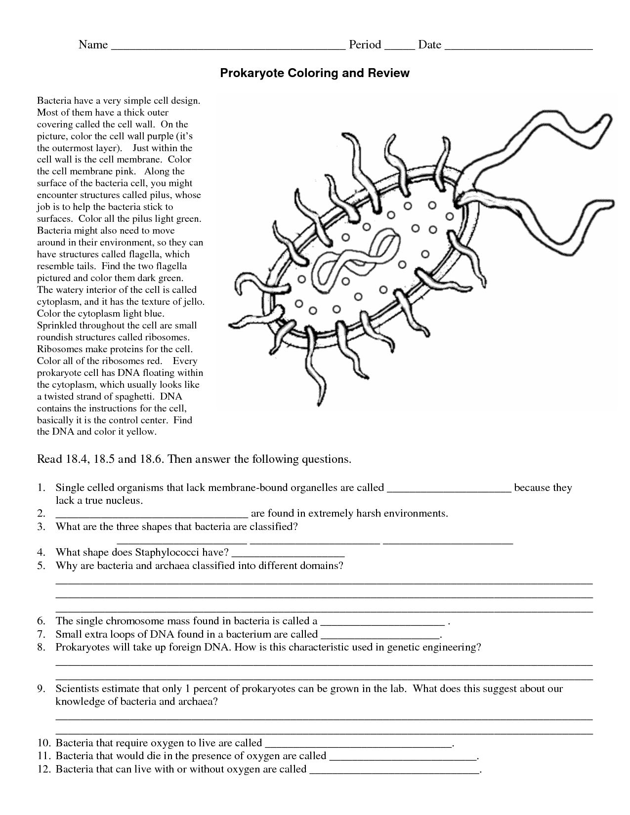Prokaryotic Vs Eukaryotic Clip Art
