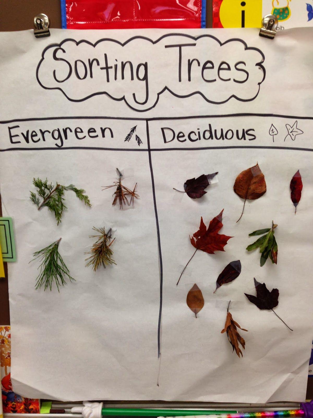 Sorting Trees Chart