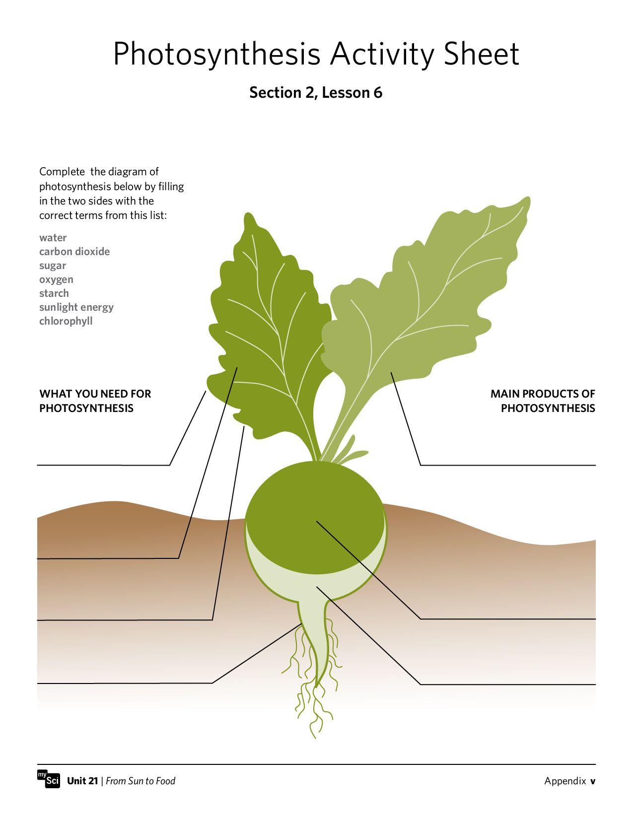 Photosynthesis Activity Worksheet Fifthgrade Science Instructionalmaterials Mysci