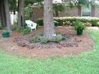 Ideas for landscaping under pine trees in the yard | For ...