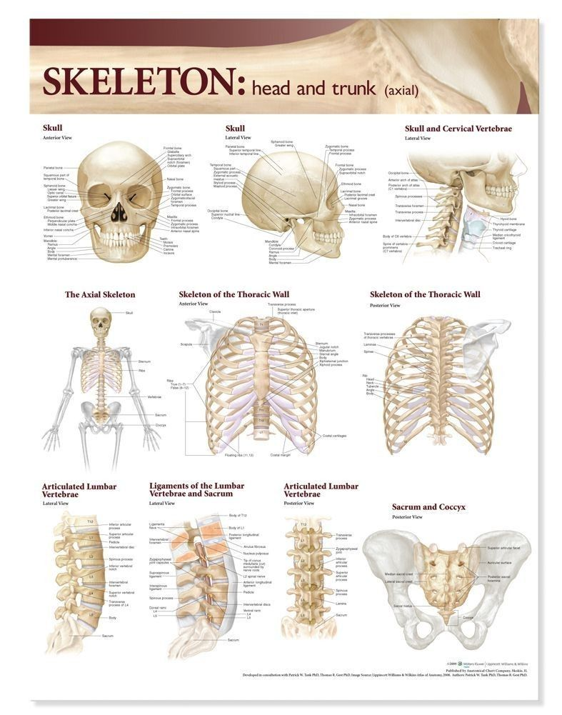 Lippincott Anatomy Charts