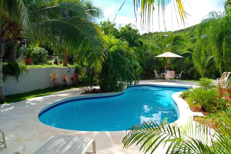 Tropical Landscaping Ideas Around Pool Trees Surround The