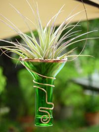 Air Plant Holder - Recycled bottle - Green | Crafting ...
