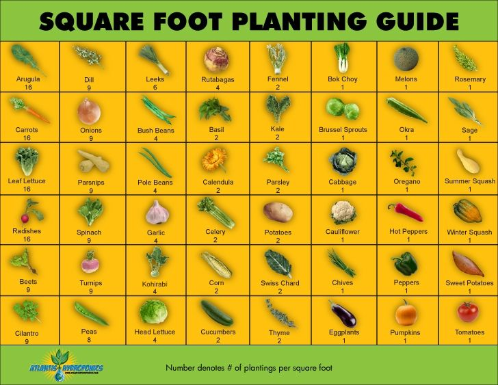 Square Foot Planting Guide Gardens Vegetables And Vegetable Garden