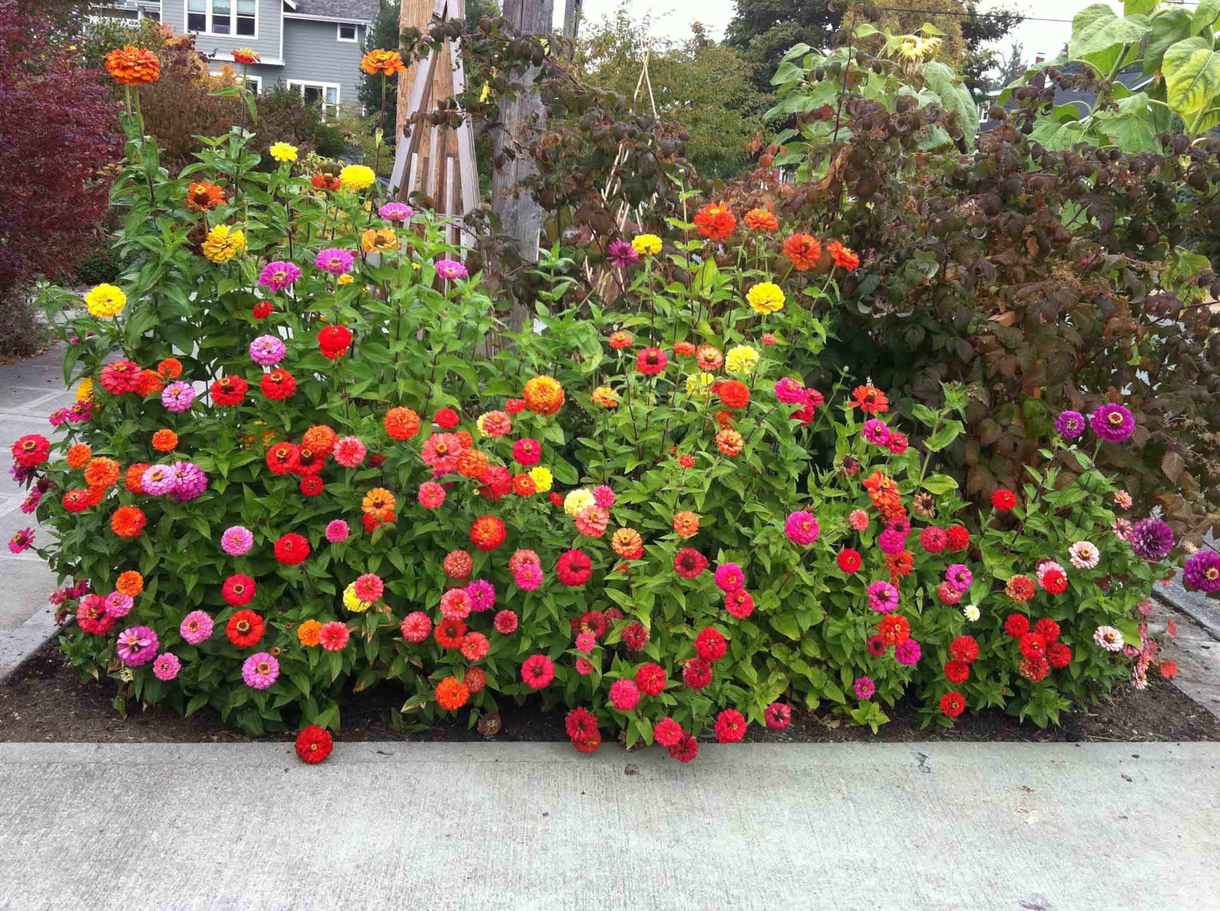 Small Flower Gardens Wallpaper Flower Garden Design Ideas